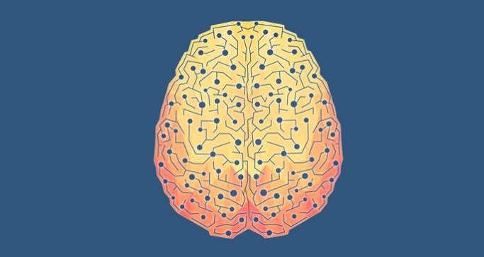 Cross section of brain